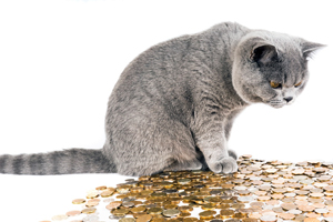 crypto art currency cat