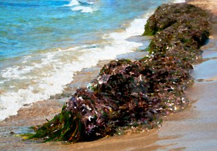 sea-drowned-fable-fiction-seaweed