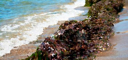 sea-drowned-fable -fiction-seaweed