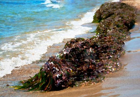 sea-drowned-fable-fiction-seaweed
