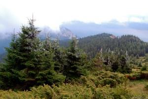 An evergreen forest