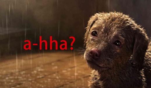 誰是a-hha?