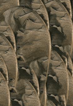 "Jean Sousa, ""Morphology V,"" 2008, digital print"