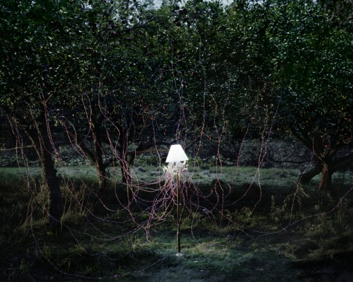 "Caleb Charland, ""Apple Trees and LEDs,"" 2011"