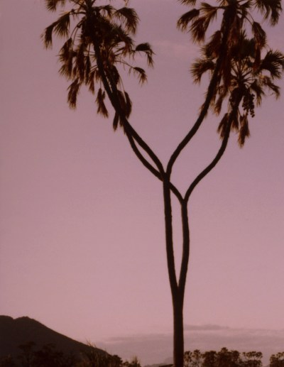 """Alice Hargrave, """"Coupled Palms,"""" 1982-2015. Archival pigment print, 16 x 12 inches"""