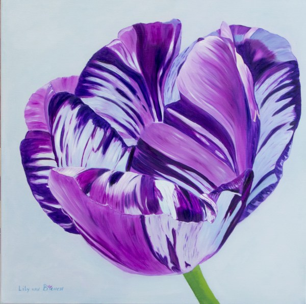 English Virus Violet Tulip