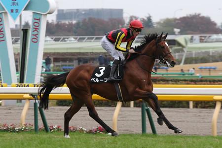 ベルーフ 返し馬(14/11/09・百日草特別)