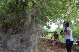 At the sycamore tree of Zeus