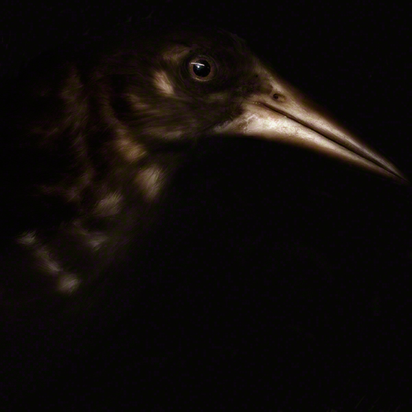 THE-BIRD