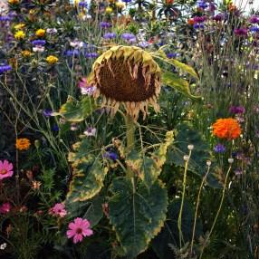 Crow's Field. Siri Kaur. Kopeikin Gallery. Photo Courtesy of Kopeikin Gallery.