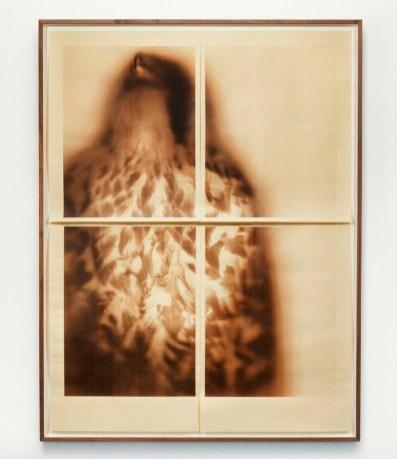 Ann Hamilton at Gemini GEL_Peregrine Falcon (Sepia), screenprint, 2017. Photo Courtesy of the Gallery.