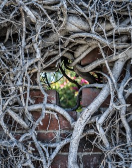 Diane Cockerill, Old Cemetary Vines; Image courtesy of the artist