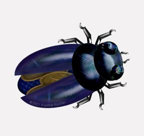 Shiny Jeweled Beetles
