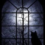 Pisică la fereastră