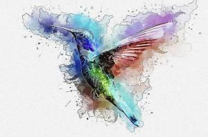 Hummingbird Gift Ideas