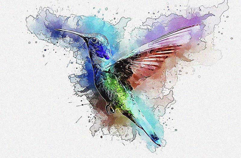 Hummingbird Gift Ideas
