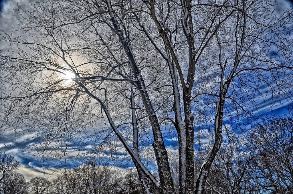 Blue Sky Through Frozen Trees Winter Scene