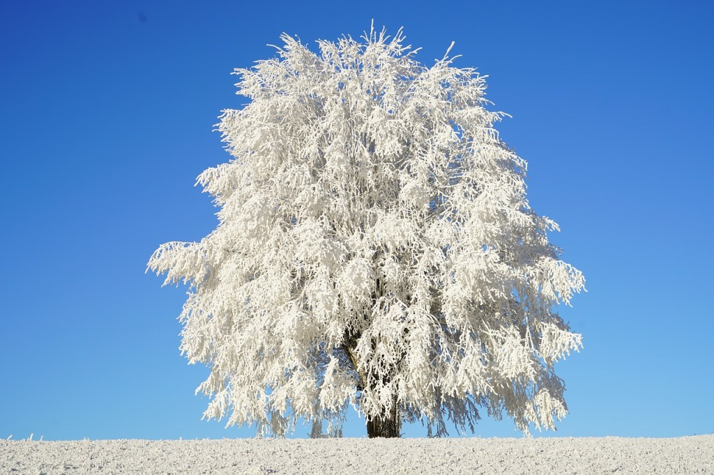 HoarFrost Covered Tree against Blue Sky