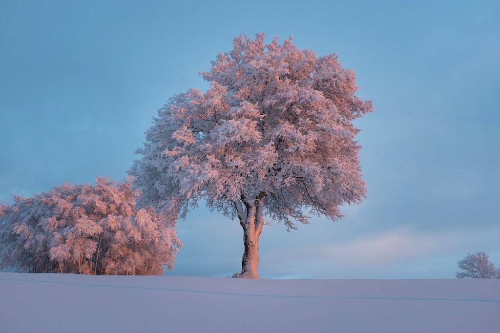 Snow Covered Tree at Sunrise Winter Scene