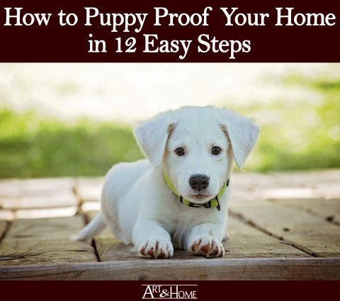 How to Puppy Proof Your Home | Put Away the Chewables