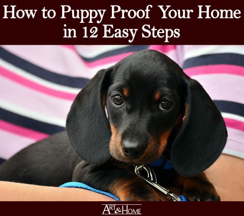 How to Puppy Proof Your Home | Have Plenty of Puppy-Friendly Toys