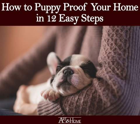 How to Puppy Proof Your Home | Batteries Should Not Be Included