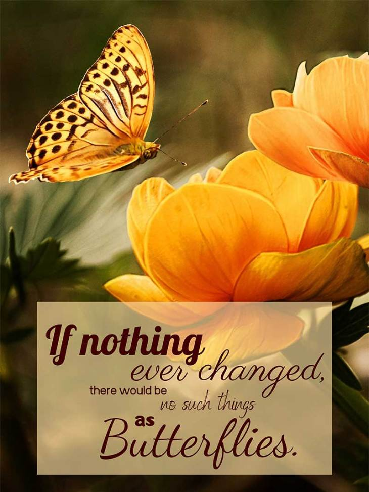 """If nothing ever changed, there would be no such things as butterflies."""