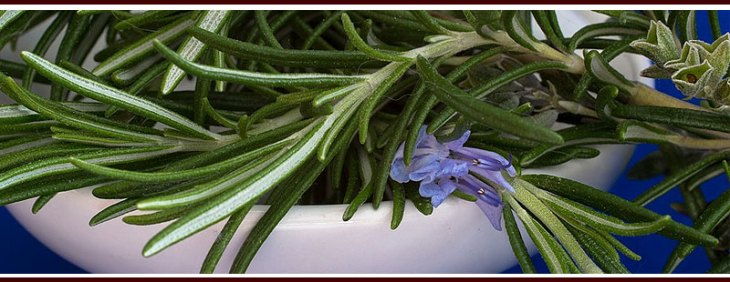 Plant Rosemary to Repel Mosquitoes