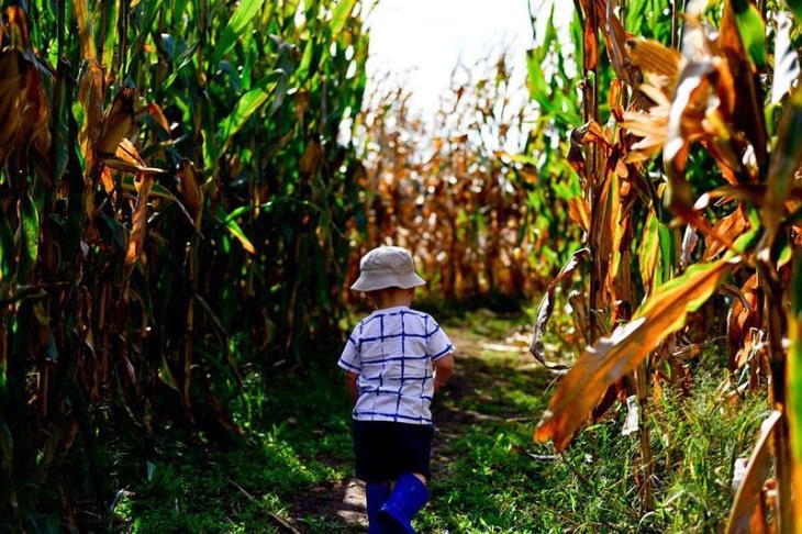 Explore a Corn Maze Together