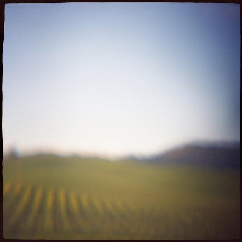 02 Vineyard Daniel Grant Photographic Print