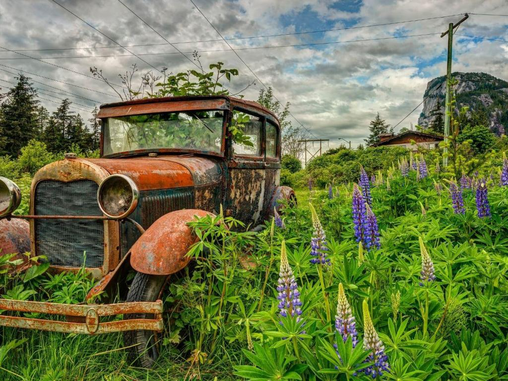 Abandoned Cars & Trucks | The Unusual Beauty of Decay