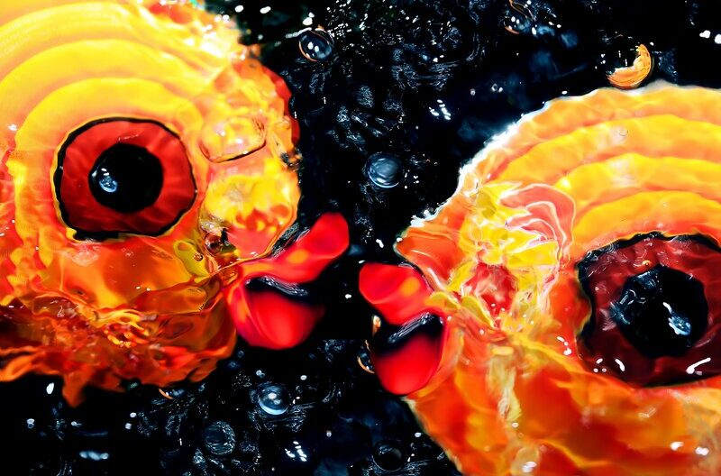 Kissy Fish | J Coleman Miller Photographic Print