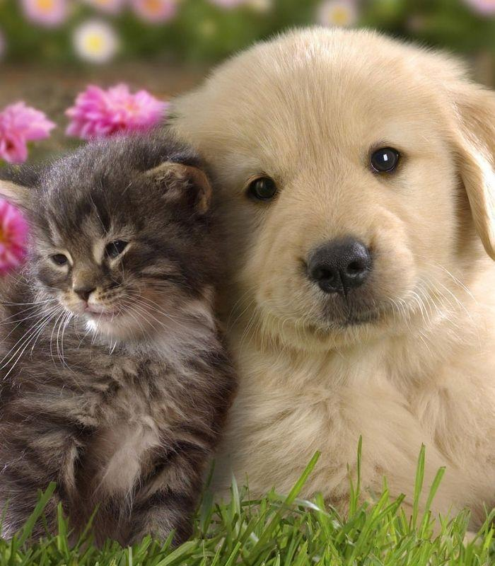 Cute Kitten and Puppy Cuddling Together