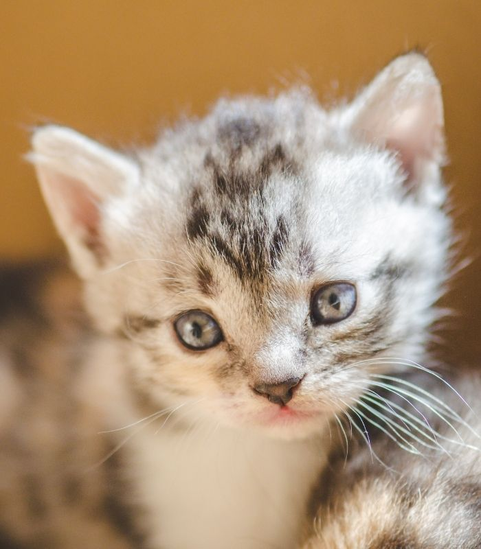 Cute and Soft Kitten Picture