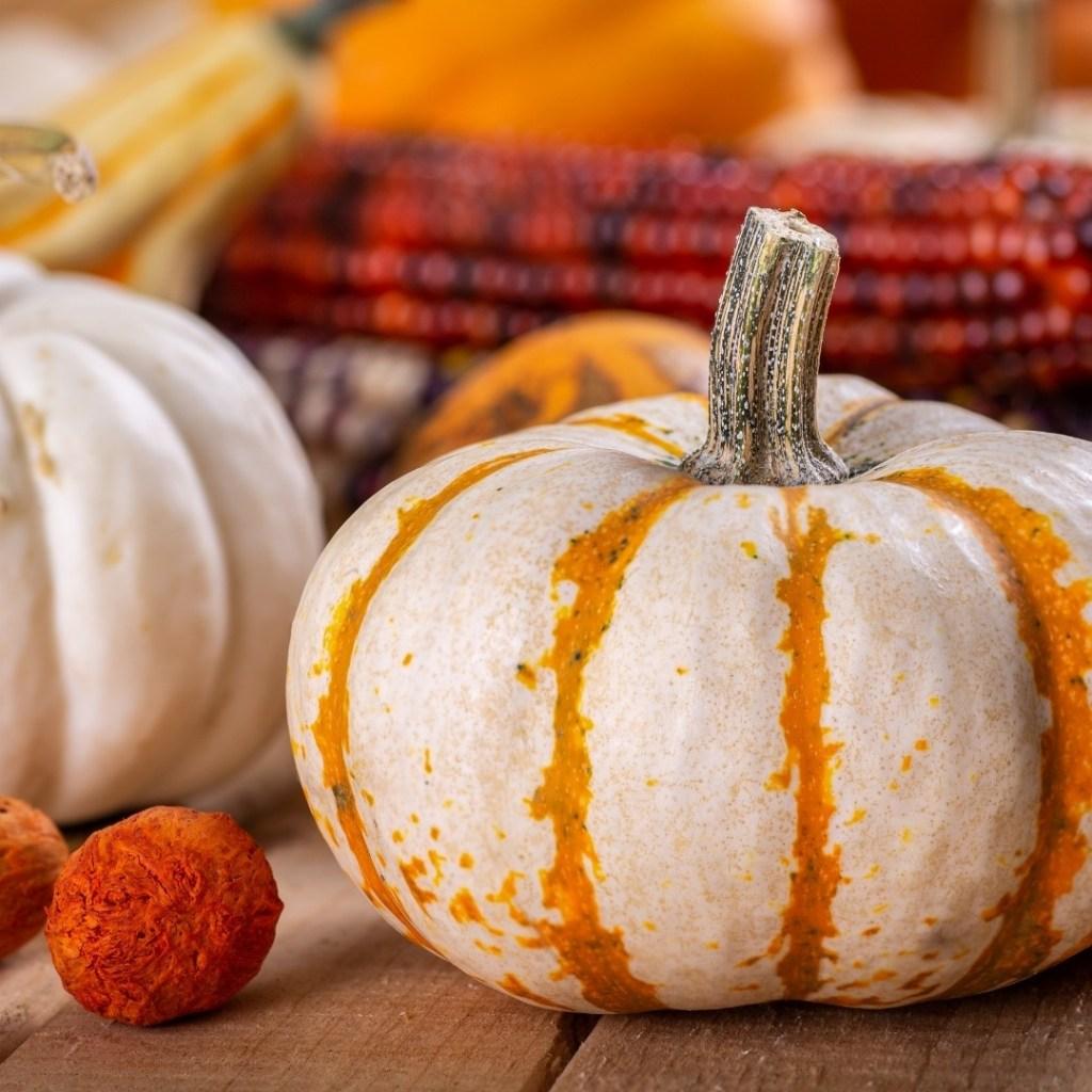 Orange and White Mini Pumpkin Fall Decor