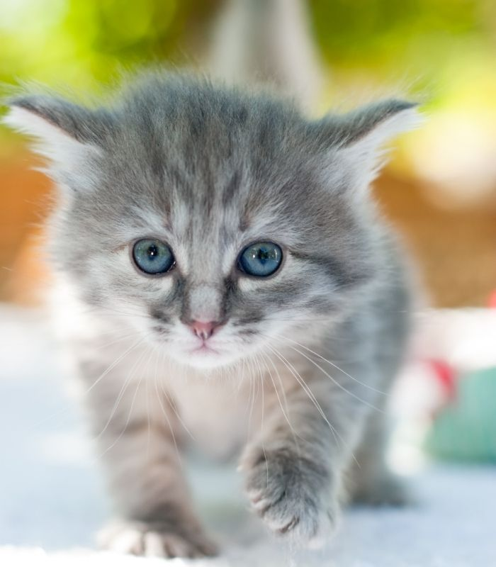 cute kitten on the prowl