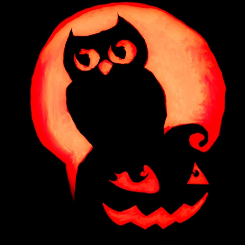 The Owl on a Pumpkin Pumpkin
