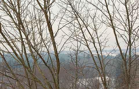 baretreebranches.jpg