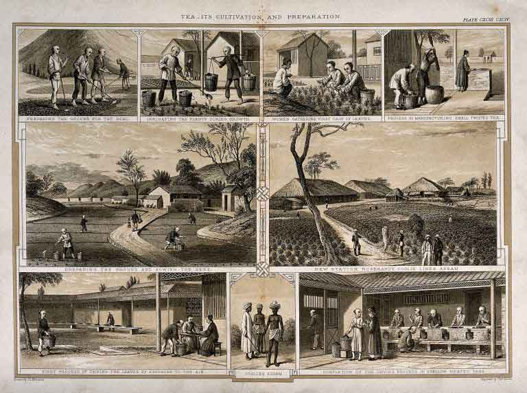 assamteaproduction1850