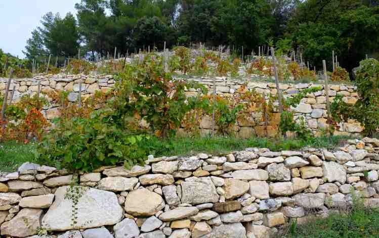 So much work, these amazing terraces for grape vines