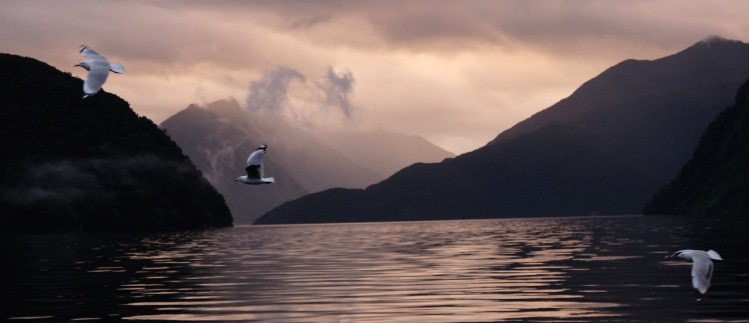 Birds of Doubtful Sound
