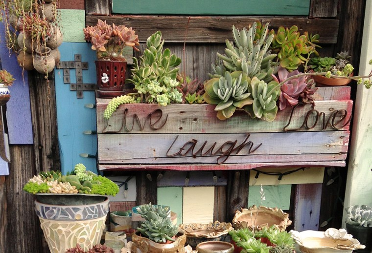 Succulent plants arranged on a workbench