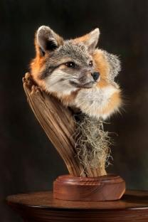 fox-head-2