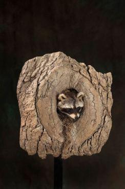 racoon-log
