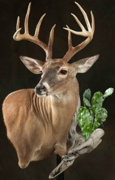 whitetail-with-cactus