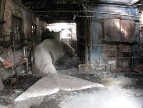 Bray Whale, clay, wood, 6'x36'x8', 2008