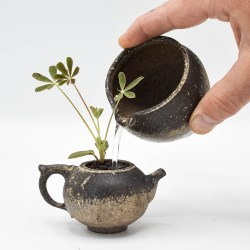 """Jonathan Steele, """"Teapot Planter and Watering Can"""""""