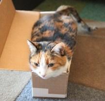 Perl in a box