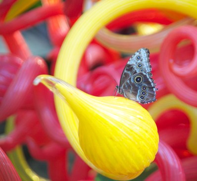 Fauna and Chihuly