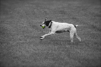 Ruby w Tennis Ball